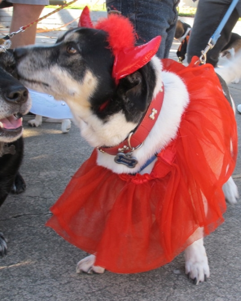 Devil at DOG-O-WEEN 1