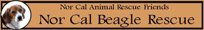 NorCal-Beagle
