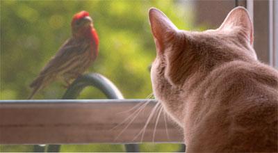 catwatchbird