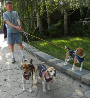 threebeagles-2