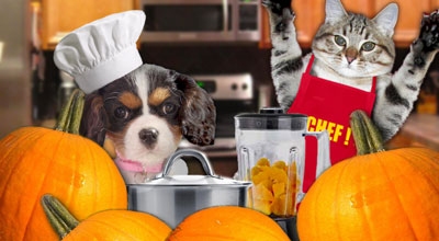 Pureed Pumpkin For Your Pets