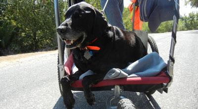Toby-relaxing-in-cart