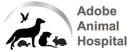Adobe Animal Hospital