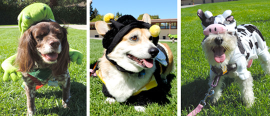 Dog-O-Ween Costume Contest