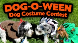 Come join us at our first annual DOG-O-WEEN costume contest hosted by Friends of the Palo Alto Animal Shelter