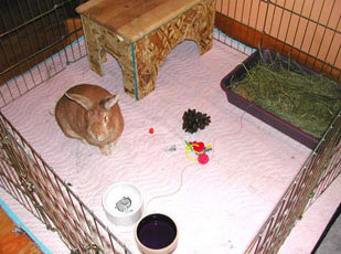House Rabbit Habitat. Use an old blanket or rug under the exercise-pen. This protects your floor, and can be easily washed and gives your bunny a soft place to play.
