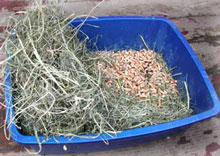 A rabbit litterbox. Use a plastic cat litter pan, put a layer of pellet stove pellets on the bottom, next put a few handfuls of hay, and top with fresh grass hay daily.