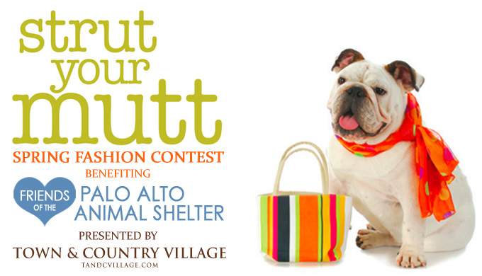 Strut Your Mutt Spring Fashion Contest at Town and Country Village