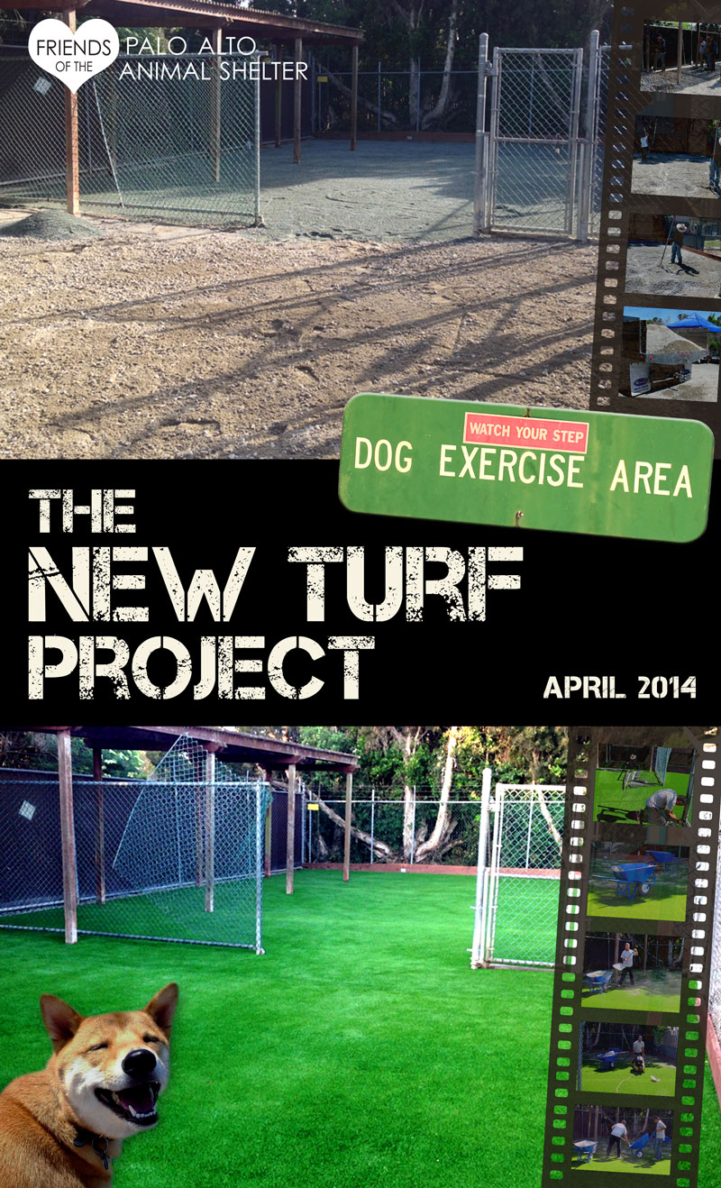 The New Turf Project